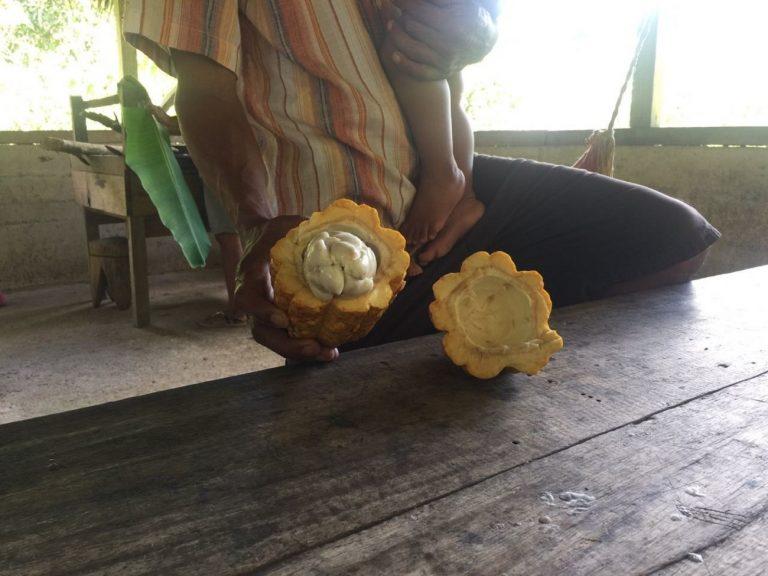 Y esta es la fruta del cacao en Costa Rica