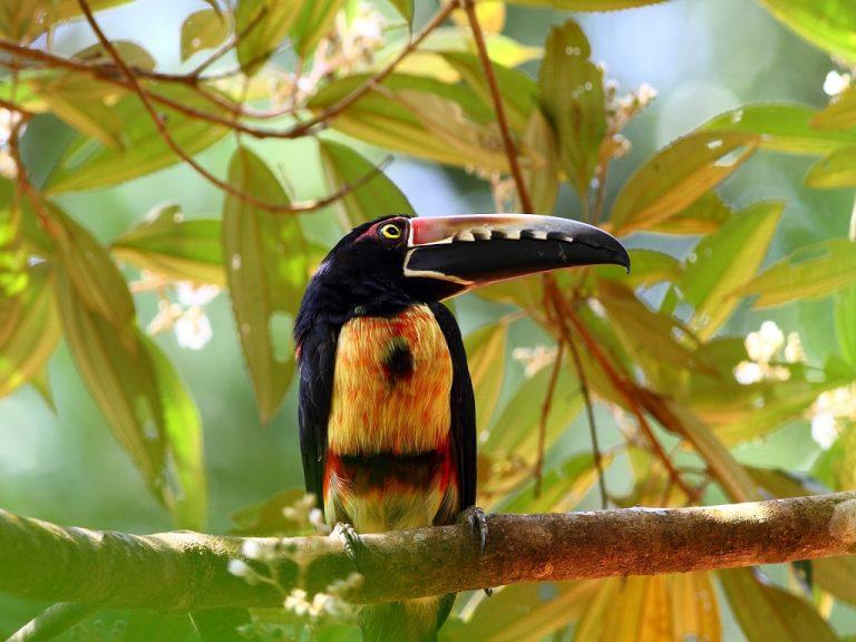 ציפורים אקזוטיות