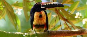 Observación de Aves en Costa Rica