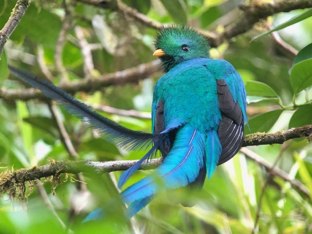 La belleza del quetzal que se encuentra en San Gerardo de Dota, Costa Rica