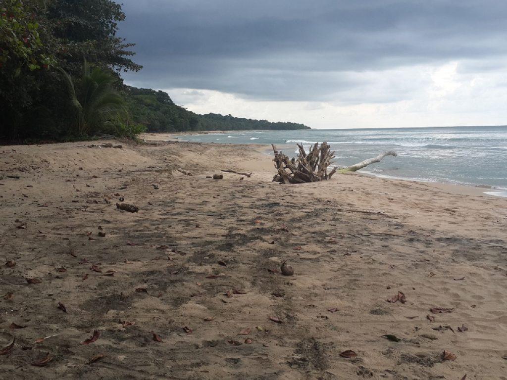חוף בתולי בפורטו ויאחו קוסטה ריקה