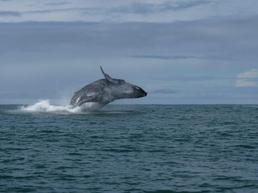 שייט עם לוויתנים