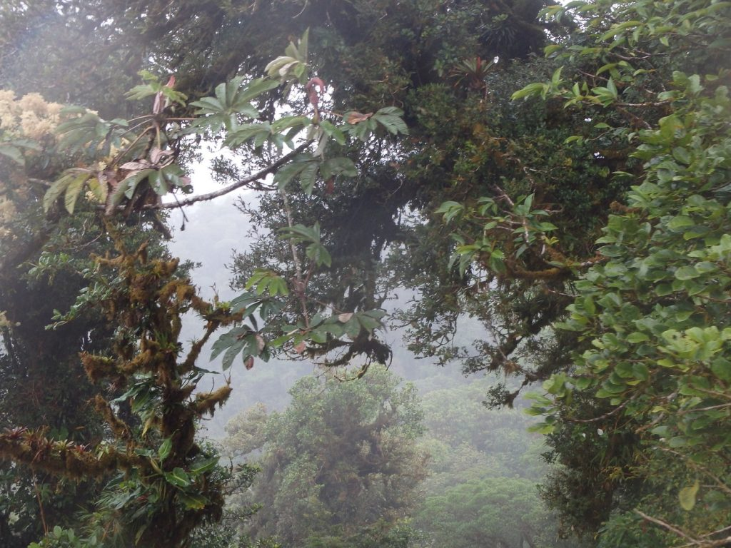 מונטה ורדה קוסטה ריקה