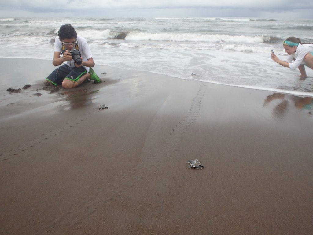 צבים קטנים שרצים לים, טורטוגרו בקוסטה ריקה