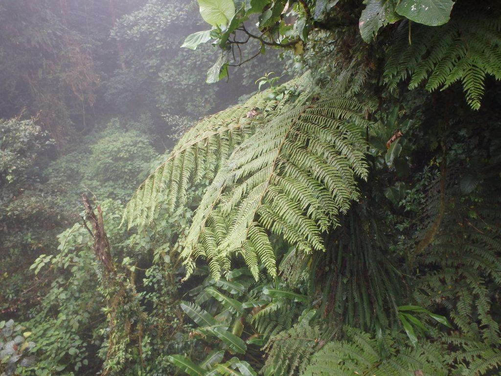 צמחייה מטורפת במונטה ורדה קוסטה ריקה