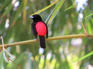 צפייה בציפורים