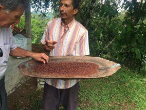 Cocoa and coffee in Costa Rica
