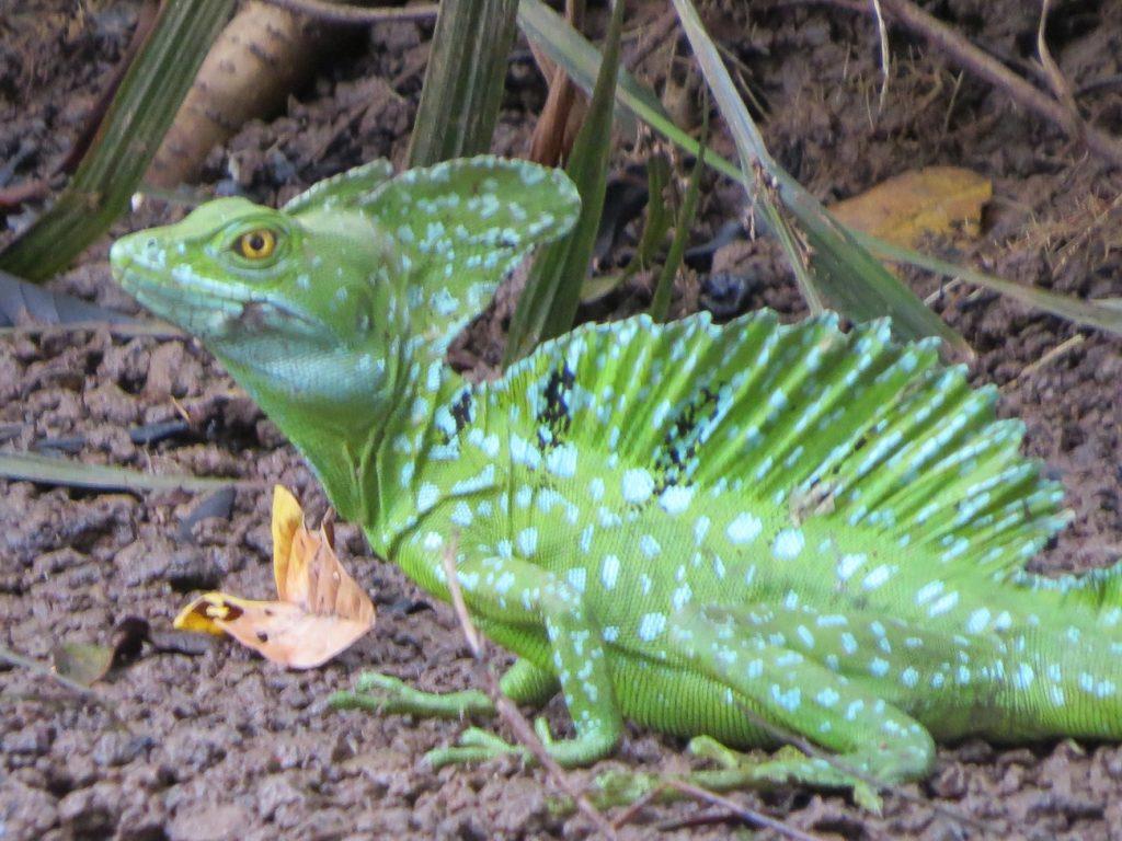 החי והצומח בפארק קאניו נגרו בקוסטה ריקה