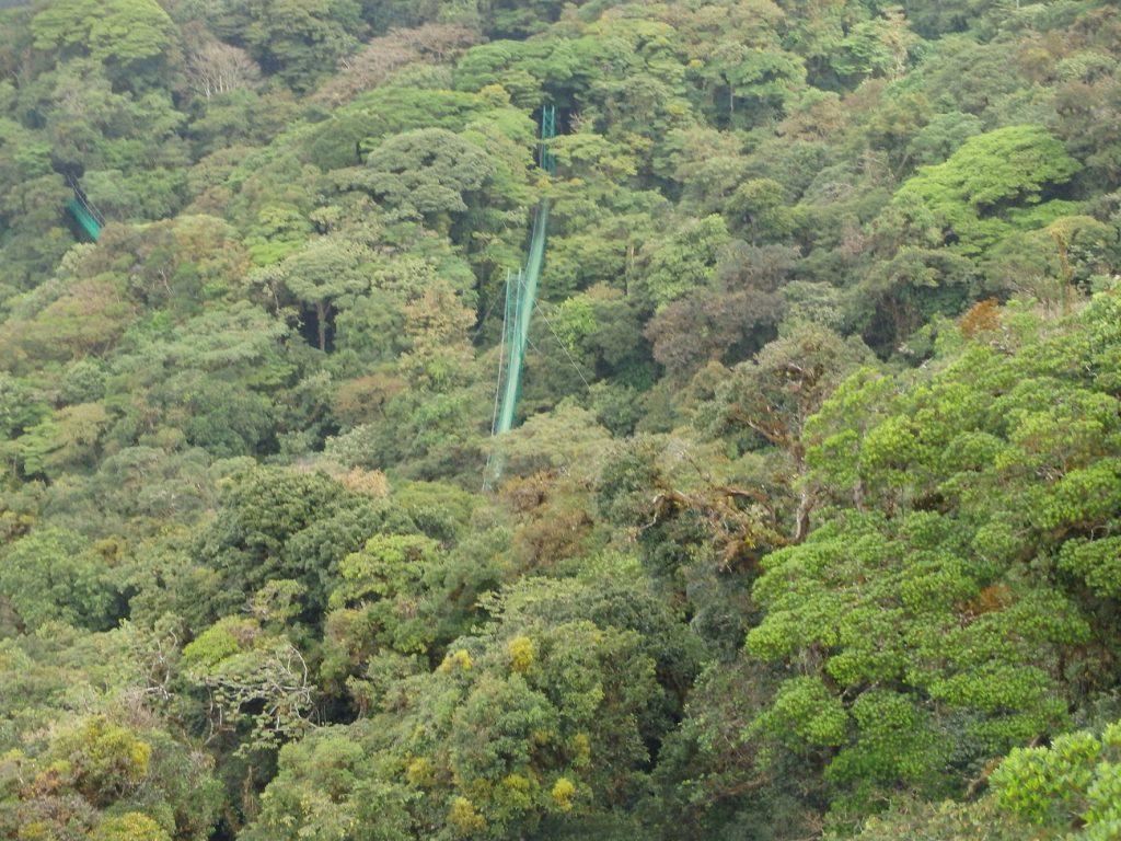 גשר תלוי במונטה ורדה בקוסטה ריקה