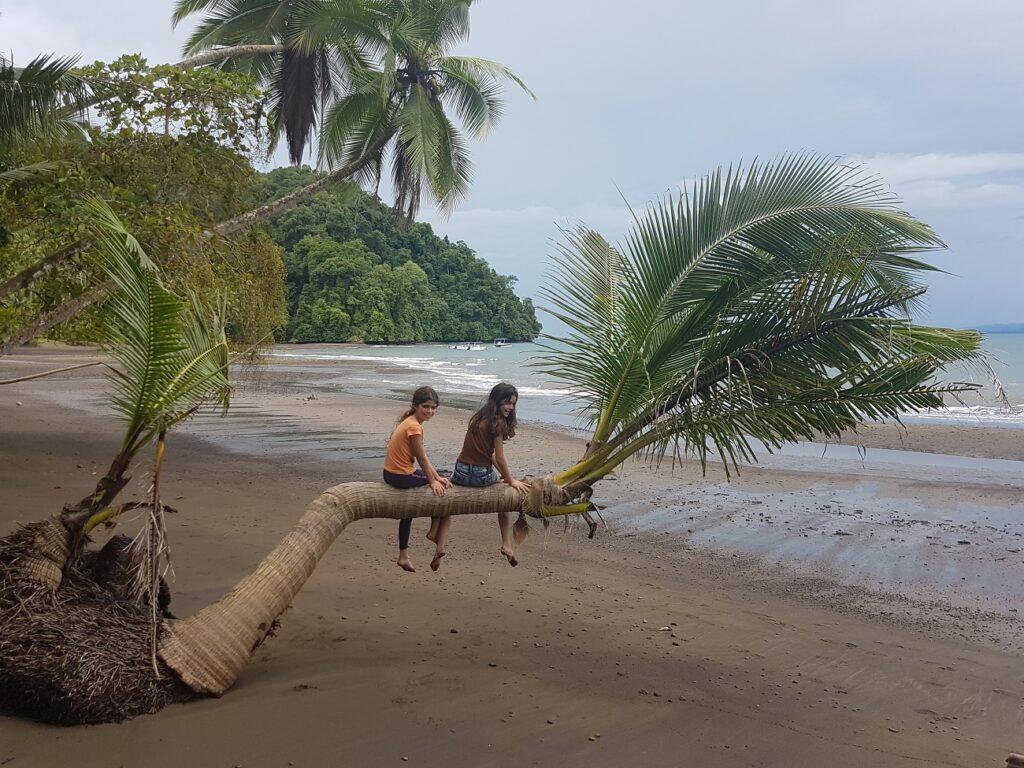 עץ דקל על הגדה במפרץ המתוק בקוסטה ריקה